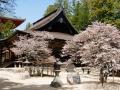 koya-san-kongobu-ji-und-sakura-a32043547